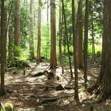 日本林業の多様性:樹種について